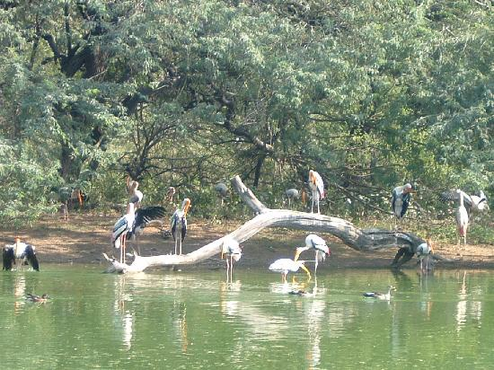 National Zoological Park Picnic Spots in Delhi for Family