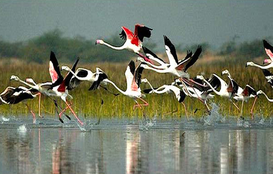 Agra Visit Place Keoladeo National Park