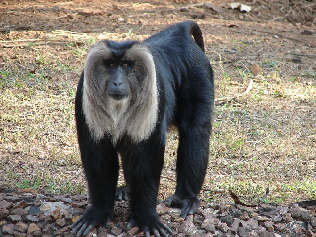 Nandankanan Zoological Park Exciting Thing to do in Bhubaneswar