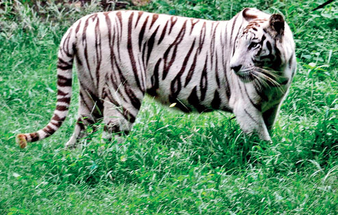 Nandankanan Zoological Park Thing to do in Bhubaneswar