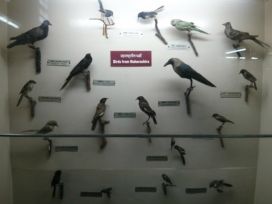 Mahatma Phule Museum Pune Maharashtra