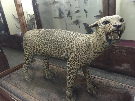 Mahatma Phule Museum in Pune of Maharashtra