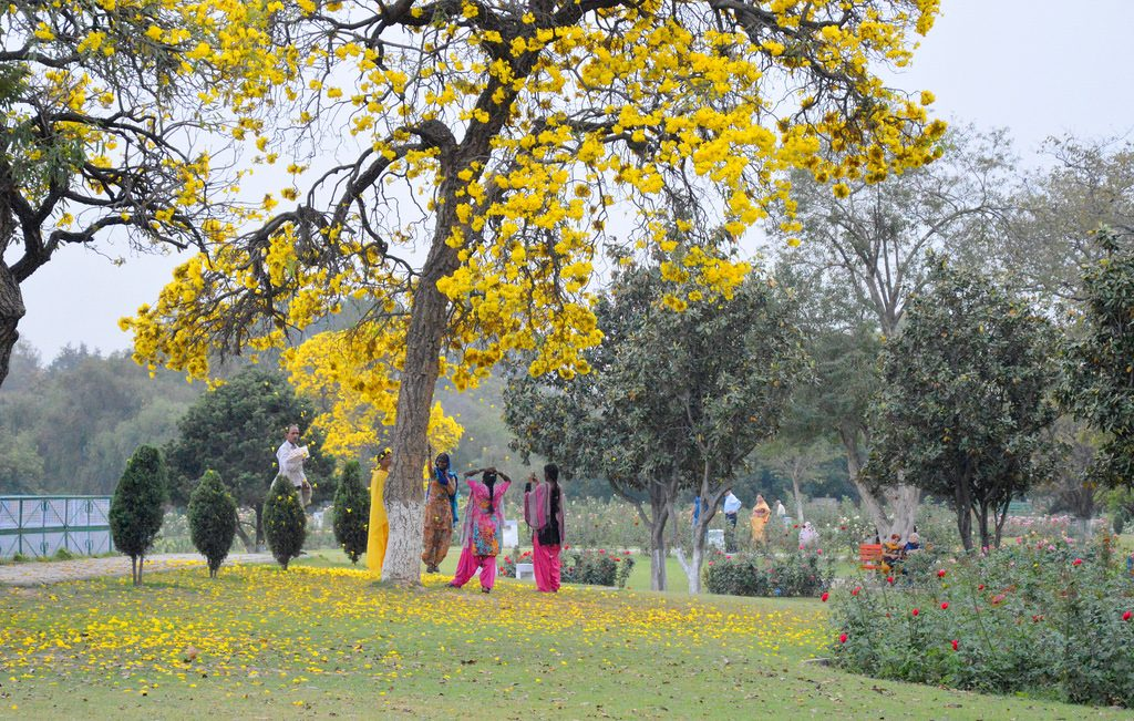 Zakir Hussain Rose Garden Placed to Visit in Punjab